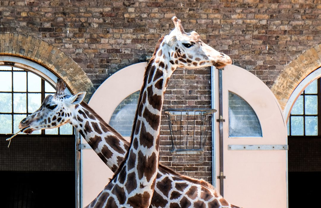 Top 6 Things to Do in Camden Town