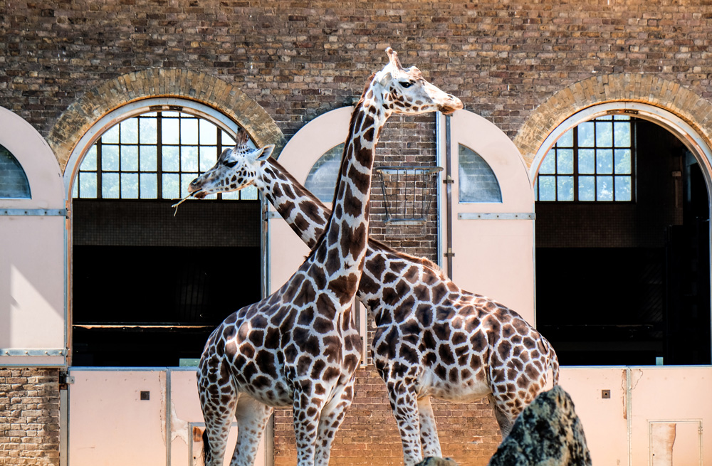 things to see and do in camden town london zoo